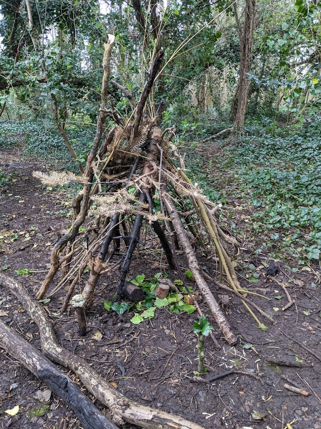 El maravilloso mundo de la bosque escuela